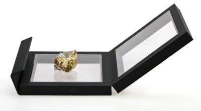"""Floating Frame for Single Seashell 4"""" x 4"""""""