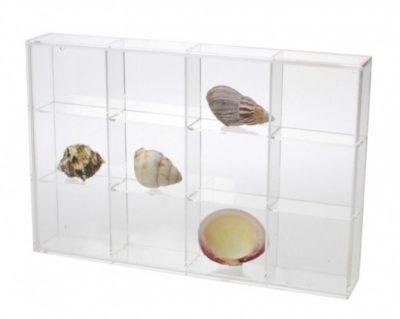 Seashell Display Case - Medium 12 Compartments