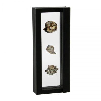 """Floating Frame for Multiple Seashells 11"""" x 4"""""""