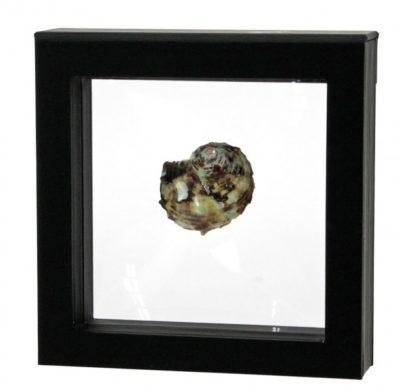 """Floating Frame for Single Seashell 5-1/8"""""""